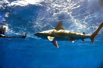 Hawaii Shark Diving Tours