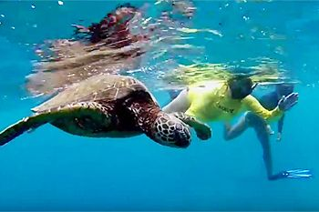 North Shore Snorkel Tours - Turtle Tours