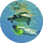Private Tours Oahu Hawaii Snorkeling Tours