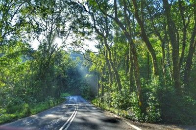 Private Tour Road To Hana  Hawaii Real Nature Tours