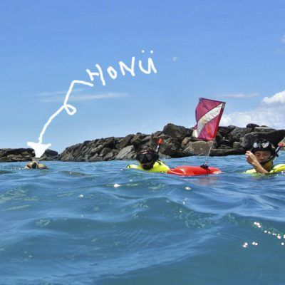 North Shore Turtle Cove Snorkeling Tour