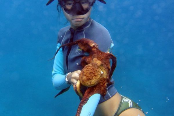 Free Diving Oahu