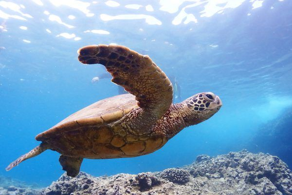 Where to Snorkeling In Oahu