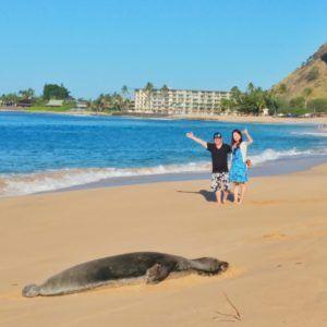 seal-on-beach-west-oahu