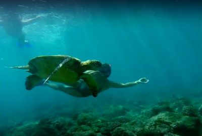 Snorkeling Maui's West Coast – Video