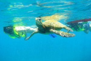 snorkel-with-sea-turtles-oahu