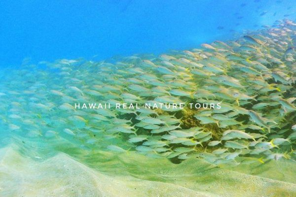 10 Things To Do On The Hawaiian Islands