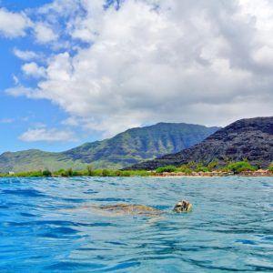 turtle-swimming-west-oahu