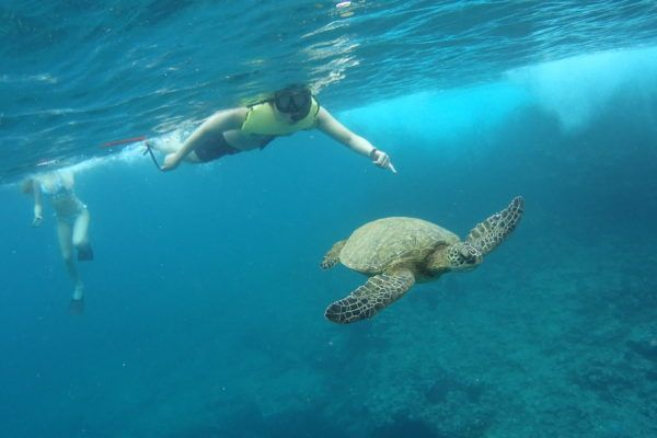 Snorkeling private tour