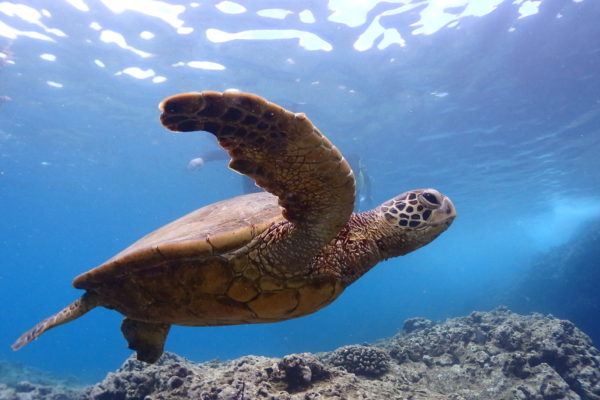 Best North Shore Snorkeling in Oahu